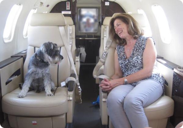 авиалинии для собак