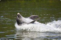 Дельфин-баскетболист!