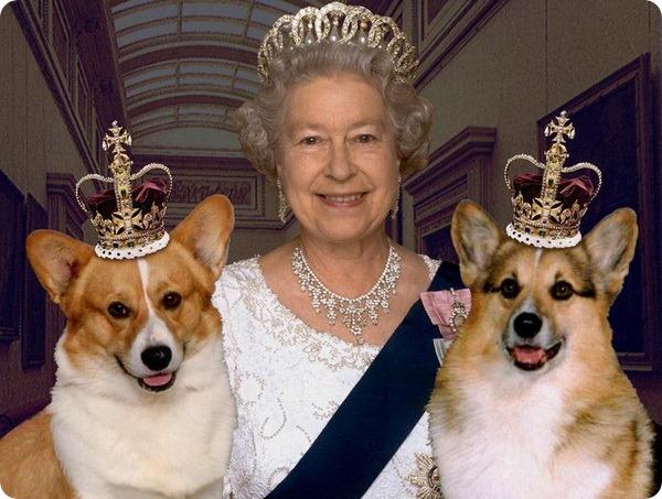 Кинолог для собак Её Величества Елизаветы II