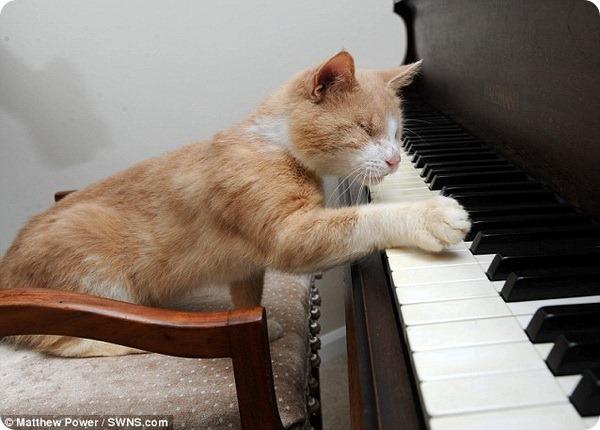 Стиви Уандер - слепой кот музыкант