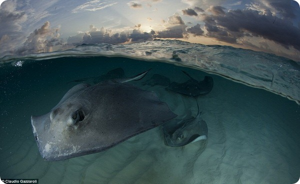 Невероятные и шокирующие мгновения из жизни дикой природы