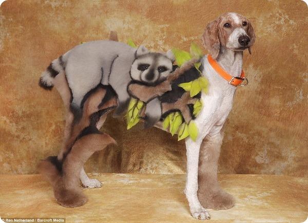 Креативный собачий груминг