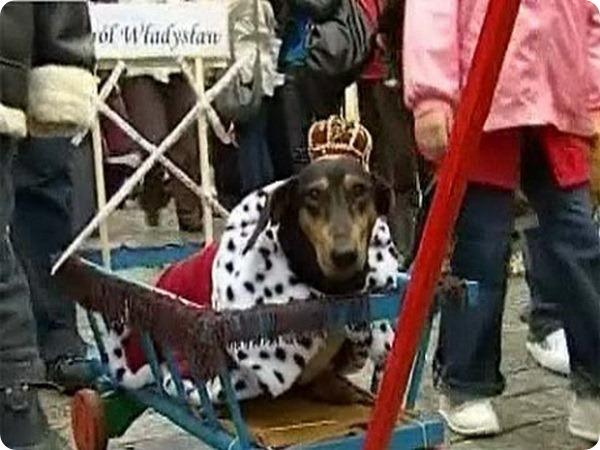 В Польше состоялся традиционный парад такс