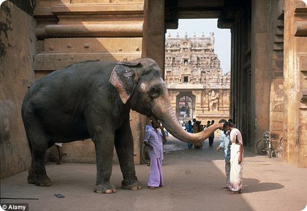 Священных индийских слонов посадят на диету