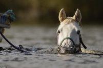Лошадка, любит поплавать на длинную дистанцию