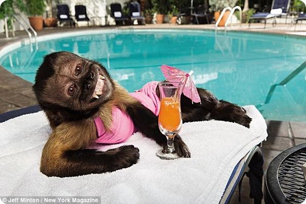 Самая известная обезьянка по кличке Кристалл!