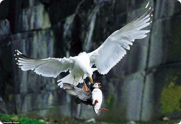 Британский фотоконкурс дикой природы