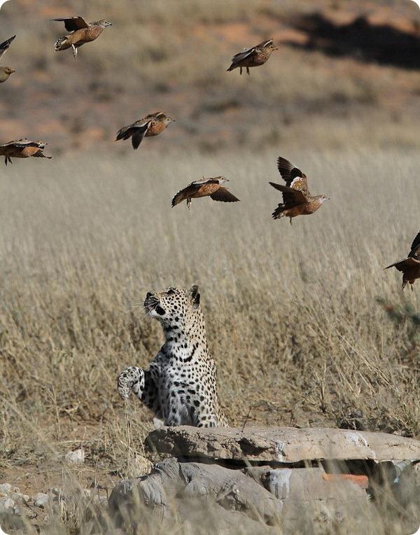 Необычная охота