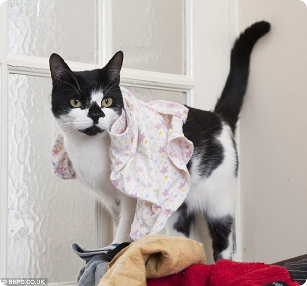 Кот-клептоман по кличке Денис