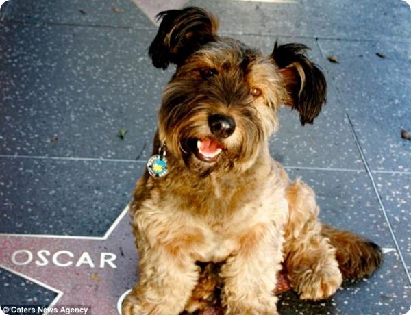Пёс-путешественник по кличке Оскар
