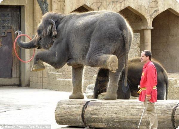 Танцевальное шоу слонов в зоопарке Ганновера
