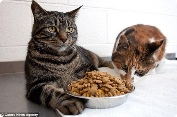 Кошки Роли Поли и Пудинг