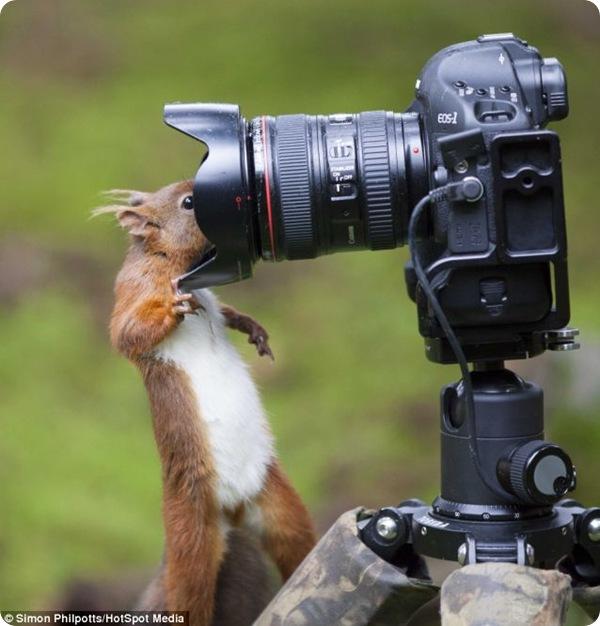 Белка и фотоаппарат