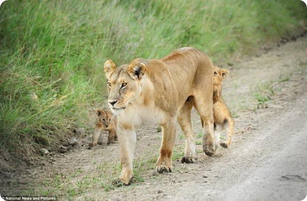 Семейная прогулка в заповеднике Масаи-Мара
