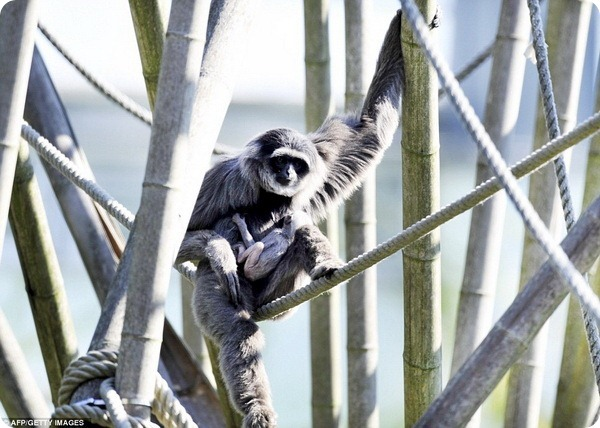 Новый обитатель Hellabrunn Zoo предстал перед посетителями