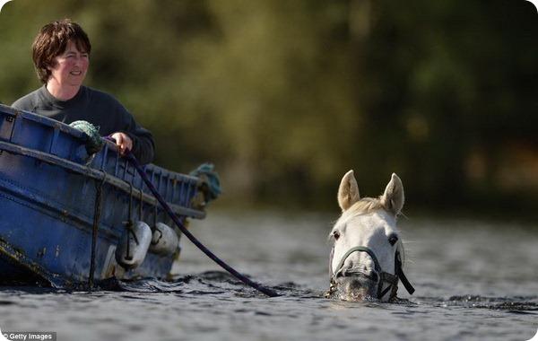 Лошадка, которая любит поплавать на длинную дистанцию