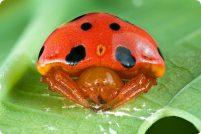Пауки и другие насекомые: чудеса мимикрии