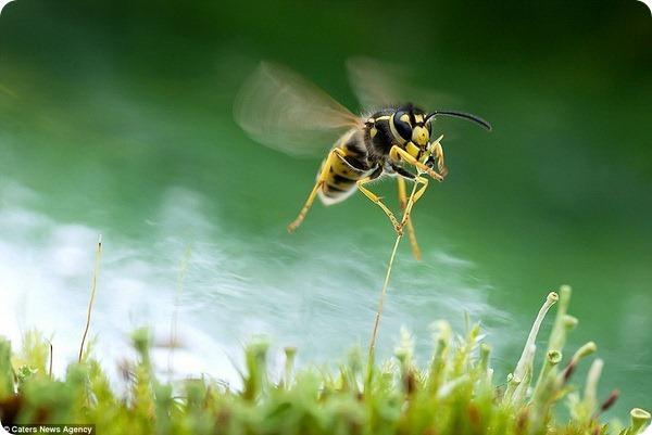 И осы бывают прекрасны!
