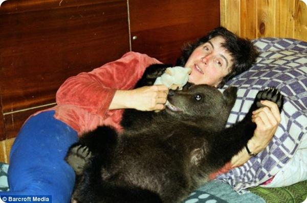 Медвежонок в доме!