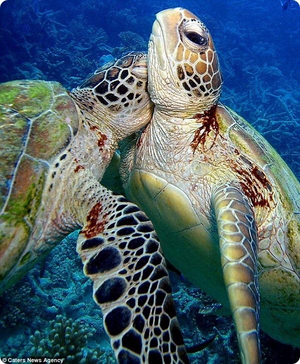 Дружба фотографа и морских черепах
