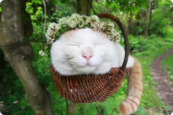 Широнеко (Shiro Neko), кот постигший нирвану