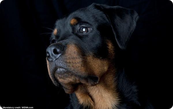Конкурс на лучшую фотографию собаки