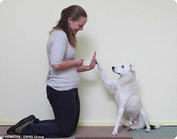 Глухой пёс по кличке Хорус