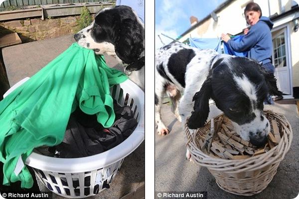 Трогательная история о псе по кличке Стэнли