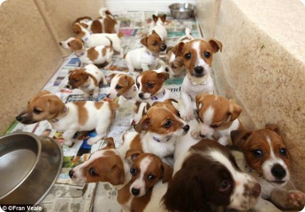 Полиция Дублина спасла щенят из рук контрабандистов