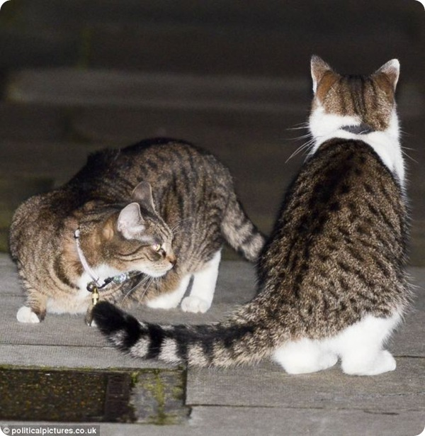 Схватка кота Ларри и кошки Фрейи