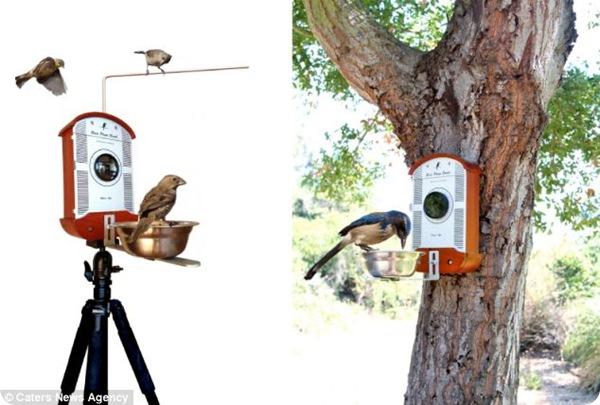 Удивительные фотография птиц
