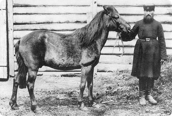 Тарпан (лат. Equus ferus ferus)