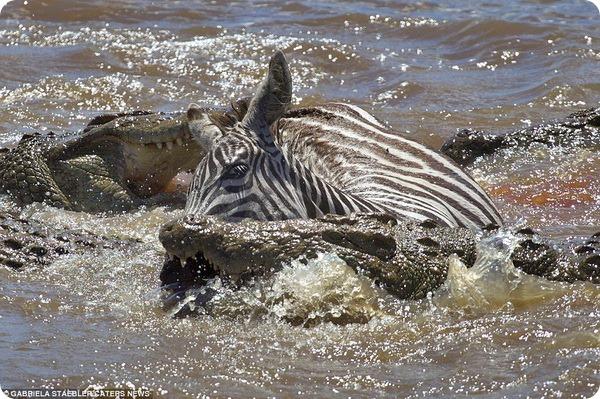 Опасная переправа через реку Мара