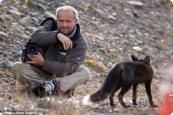 Любопытная чернобурка и фотограф