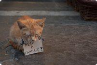 Кошки Родоса