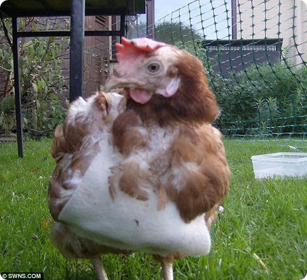 «Курица-математик»