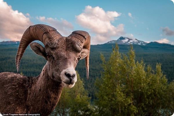 Фотографии животных с конкурса National Geographic