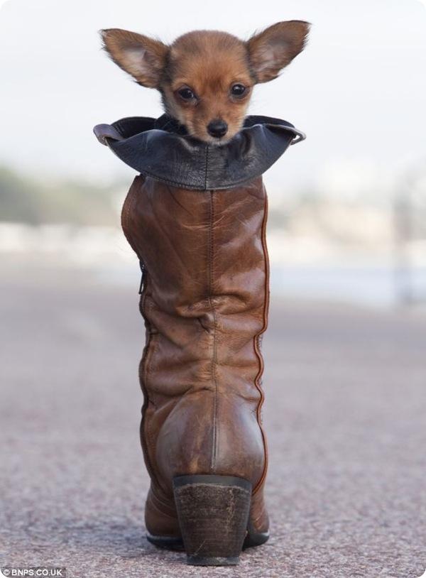 Первая прогулка щенка Мини