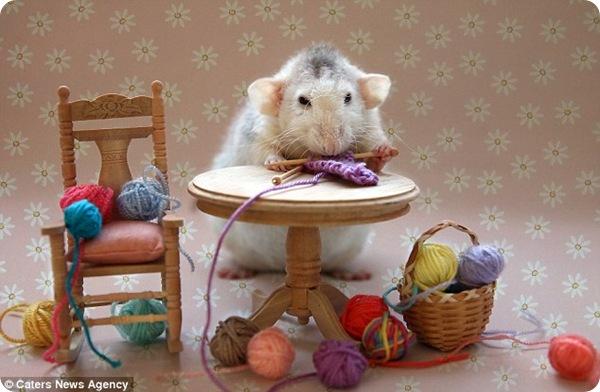 Необычные фотография крыс