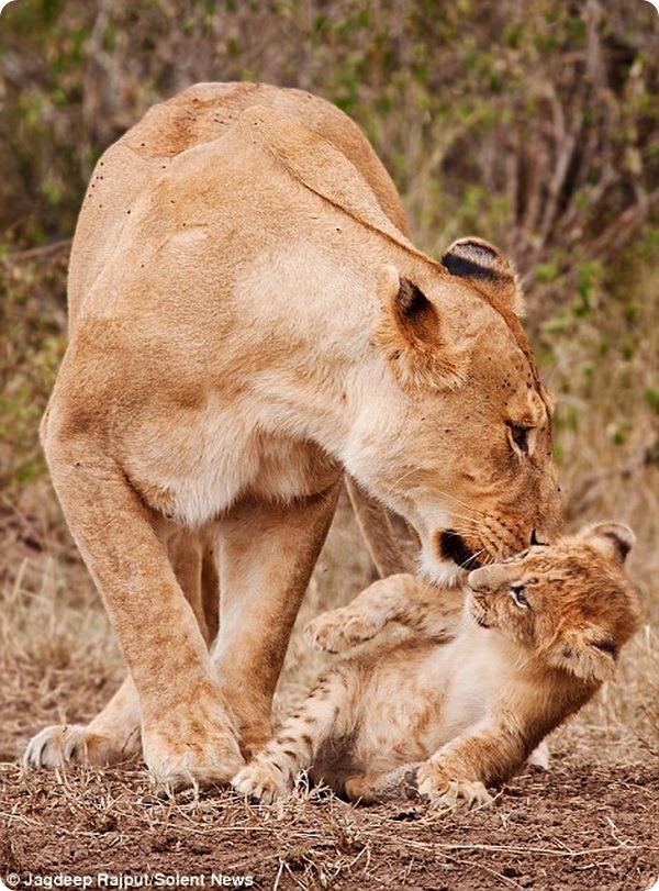 «Не щекочи меня, мама!»