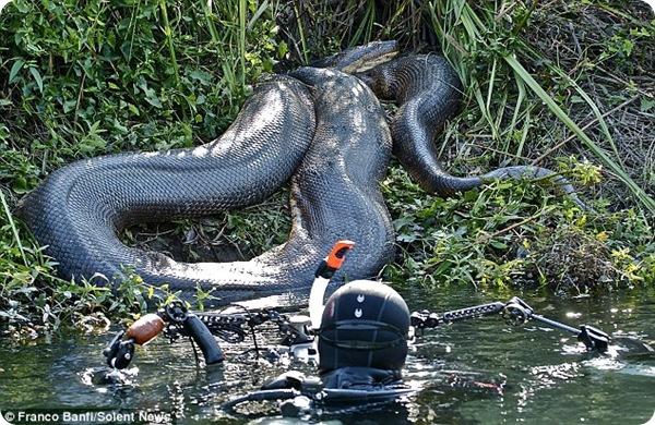 Встреча с огромной анакондой!
