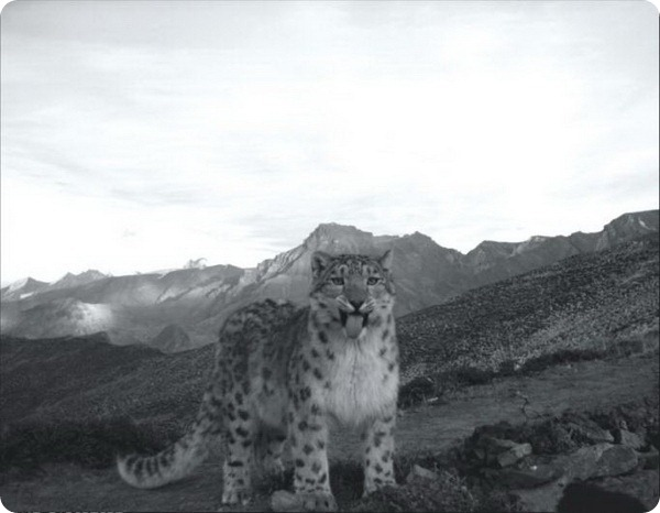 Итоги конкурса Camera-trap Photo of the Year 2012