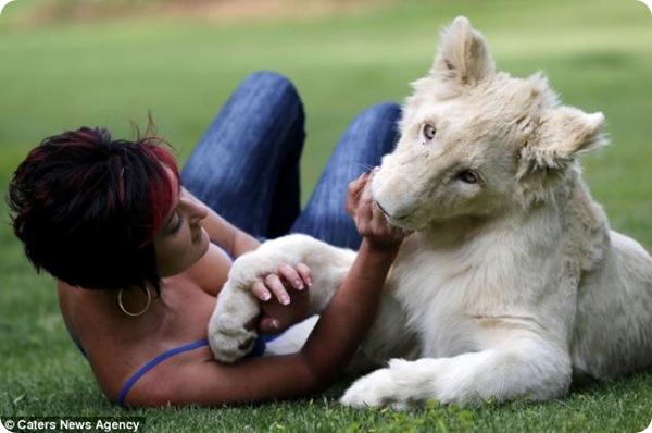 Белоснежный львёнок Тимба
