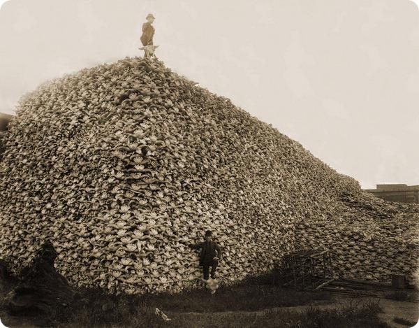 Истребление бизонов в США