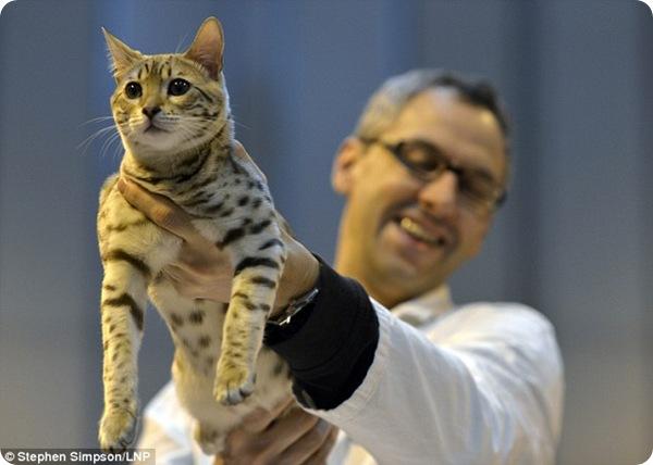 Выставка кошек в Бирмингеме