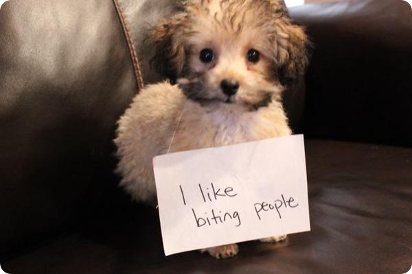Проказы собак