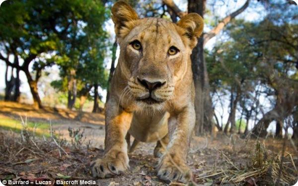 Фотографии животных африканской саванны