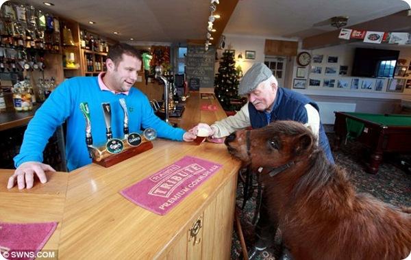 Пони-работяга Тоби отпразновал выход на пенсию