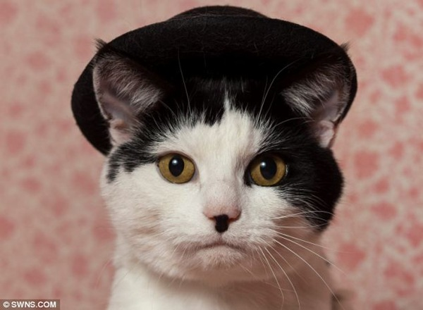 Кот похожий на Чарли Чаплина