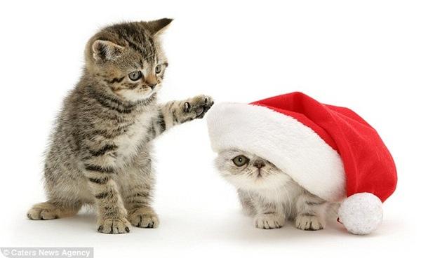 Рождественские фотографии Марка Тейлора